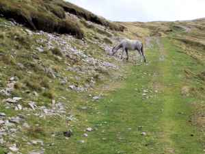 feral pony on my track - or I am on its